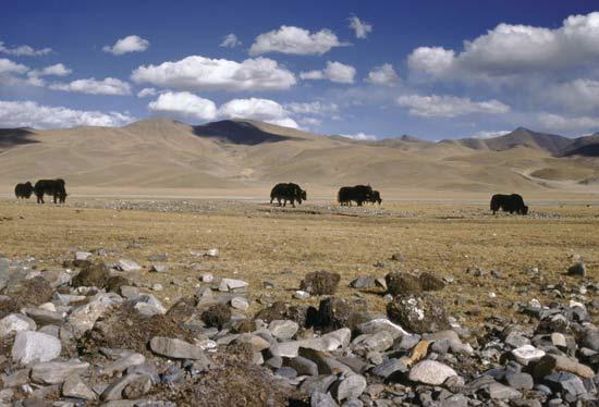 http://nanzt.info/wp-content/uploads/2009/07/98356-004-DE266899.jpg